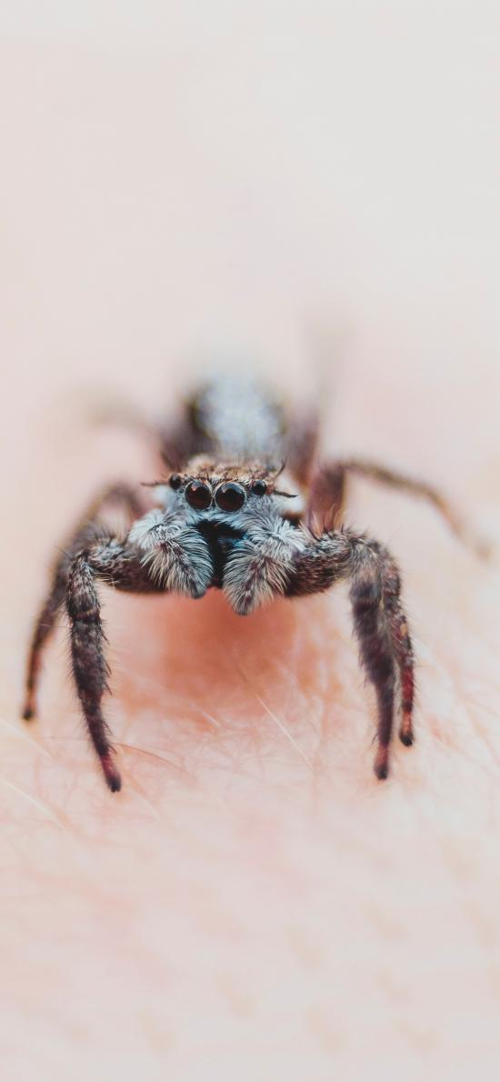 昆虫 蜘蛛 绒毛 有毒