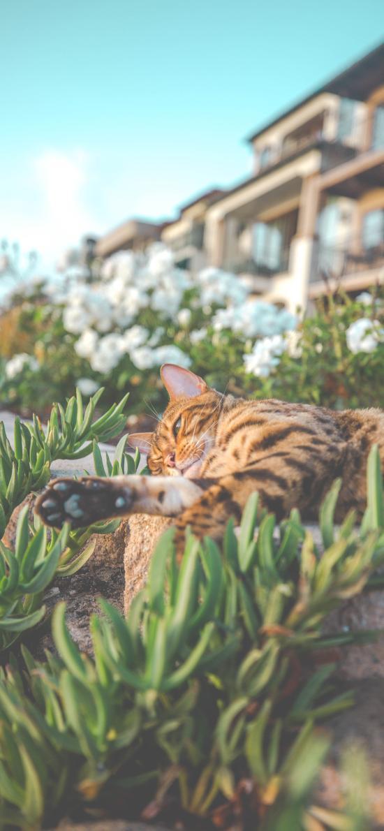 猫咪 草地 玩耍 豹猫