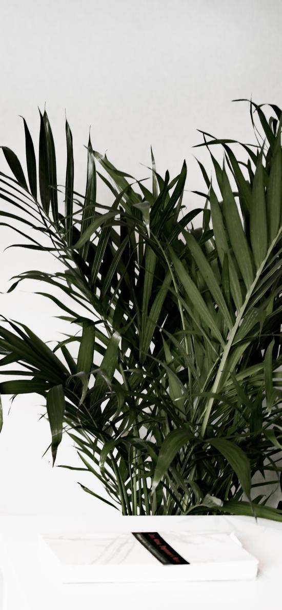 家居 盆栽 绿化 棕榈树