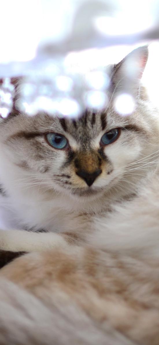 猫咪 喵星人 可爱 宠物 萌