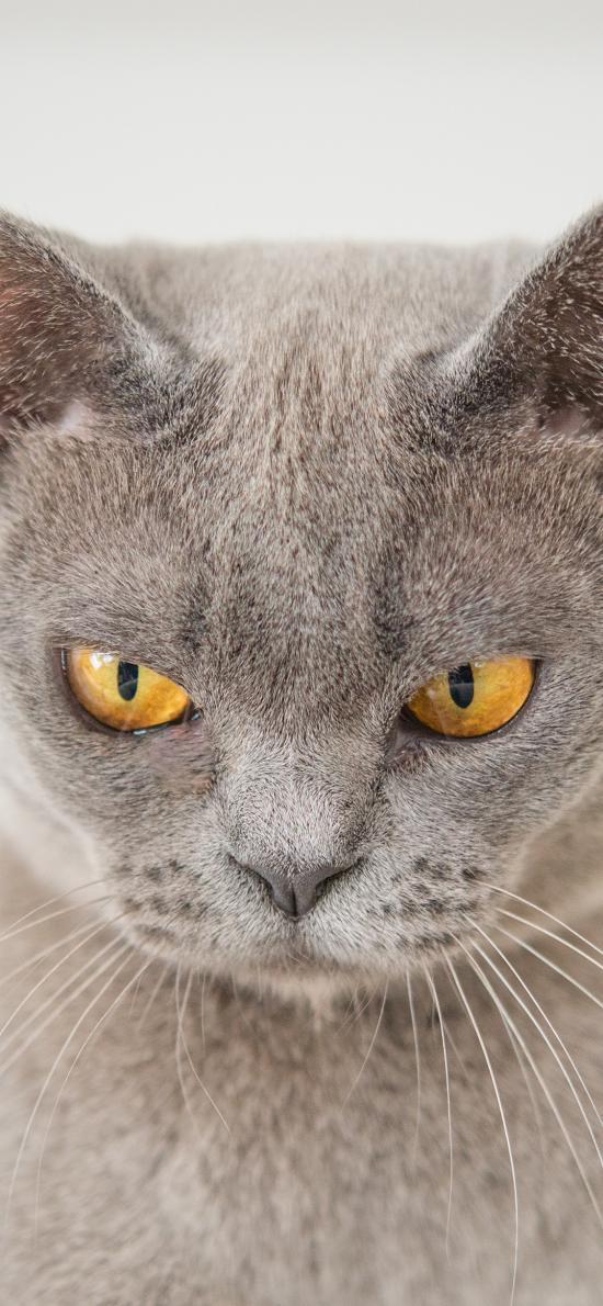 猫咪 喵星人 宠物 愤怒