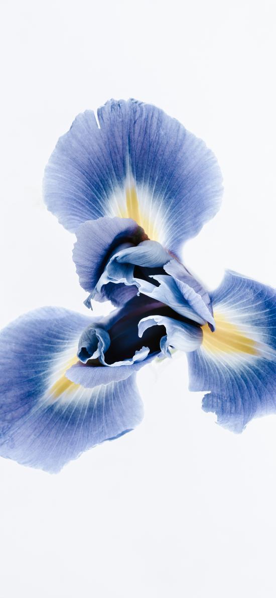 鲜花 俯拍 特写 兰花