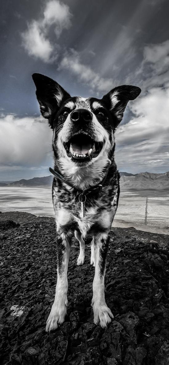 郊外 蓝天白云 宠物狗 黑白