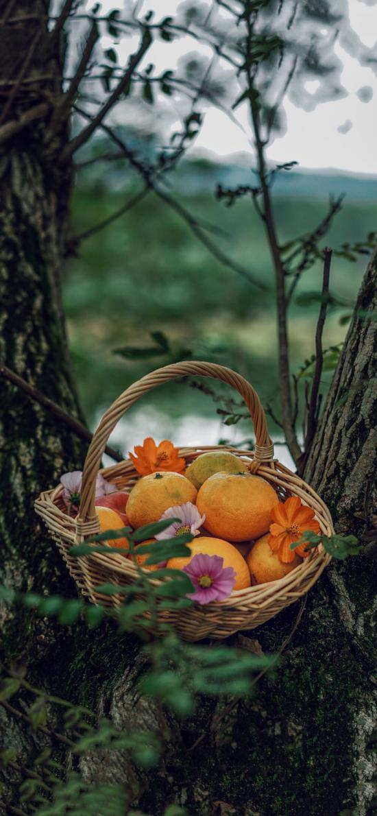 树木 篮子 水果 橘子 鲜花