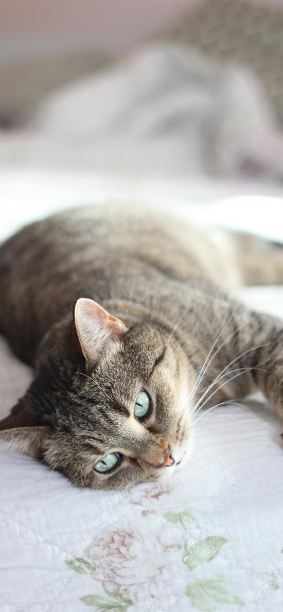 灰猫 宠物 猫咪 胡须