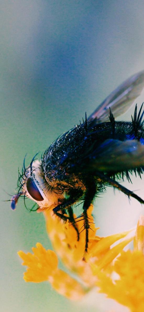 昆虫 苍蝇 花朵  害虫