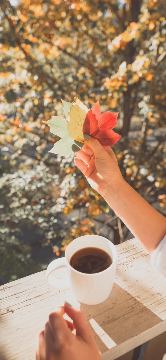 秋季 落叶 咖啡  枫叶