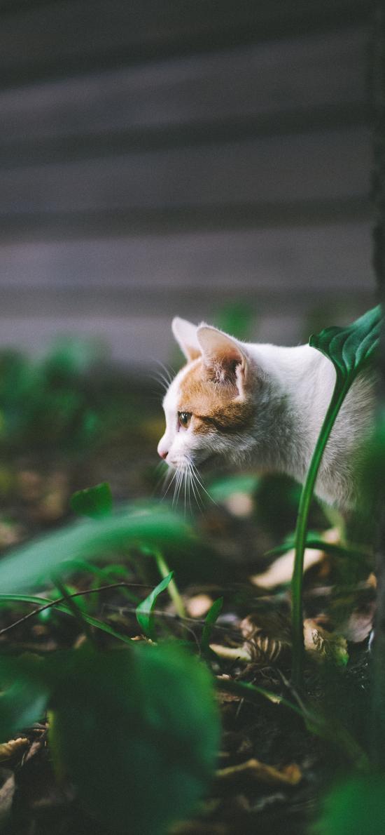 猫咪 宠物 草地 伺机