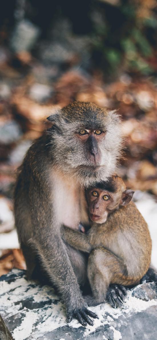 猴子 幼仔 灵长类 亲子