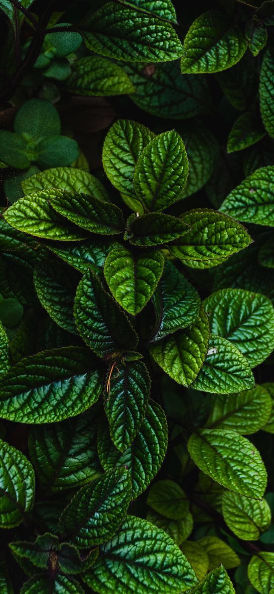 绿叶 枝叶 绿化 护眼