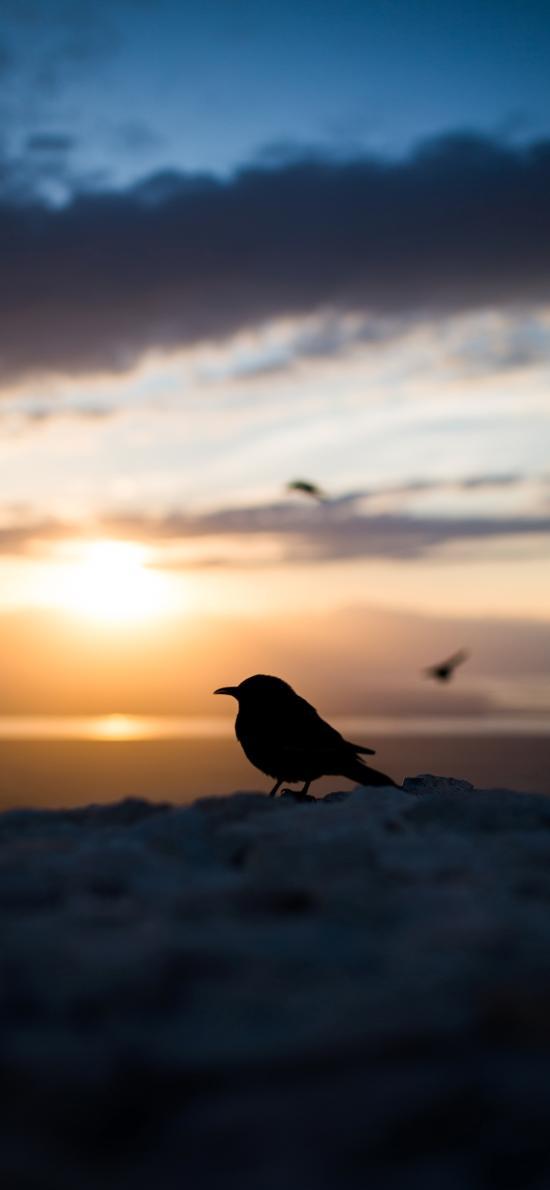 小鸟 光影 彩霞 夕阳