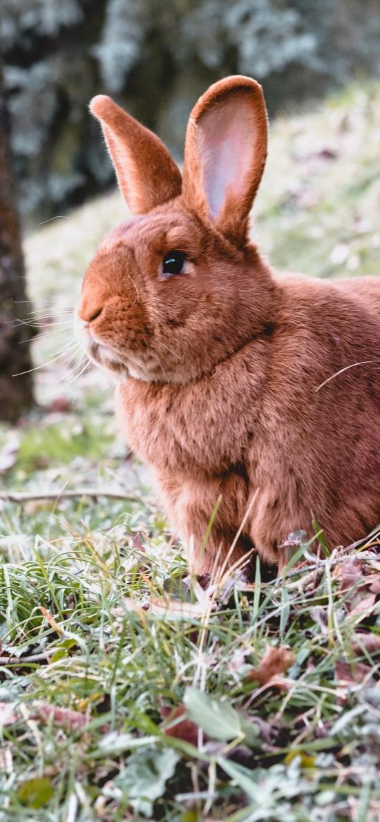 兔子 野外 草地 肥兔