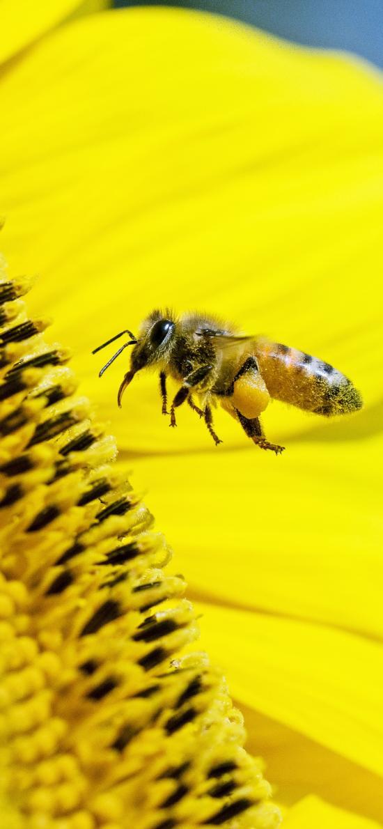 鲜花 昆虫 蜜蜂 采蜜