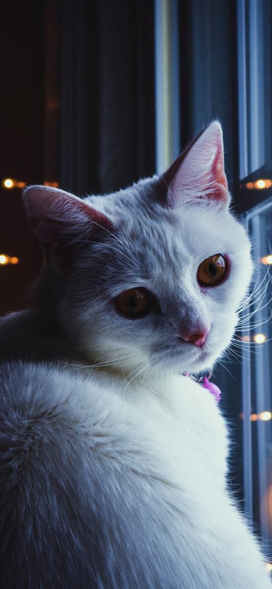 猫咪 喵星人 窗边 萌 宠物