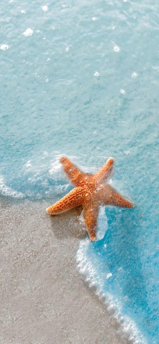 海星 海洋生物 大海 海浪 沙滩