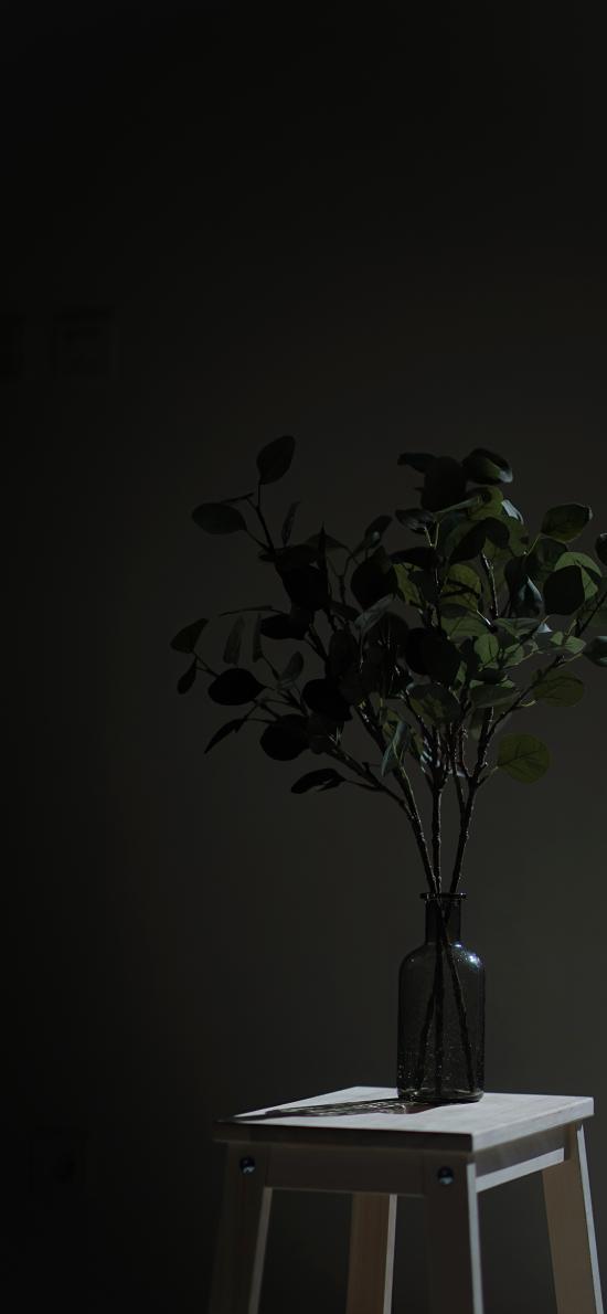 盆栽 黑暗 椅子 光影