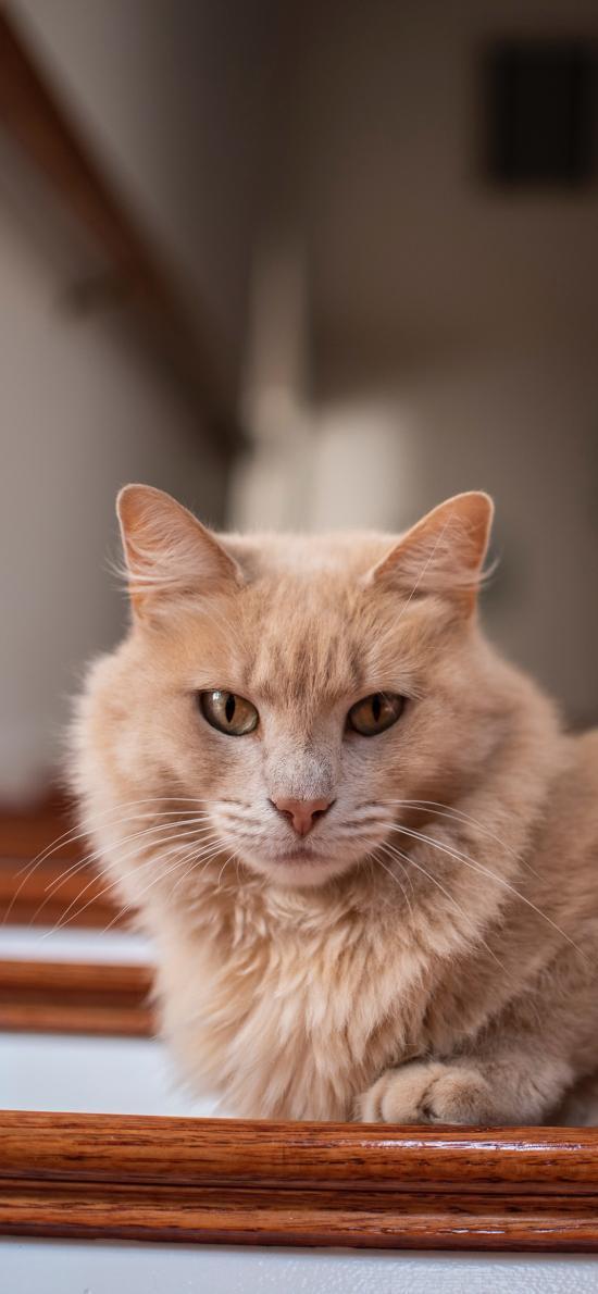 猫咪 宠物 阶梯 楼梯