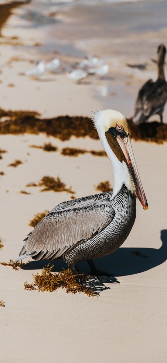 鸟类 鹭 沙地  羽毛
