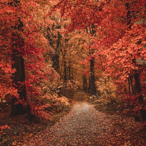 树林 秋季 季节 落叶