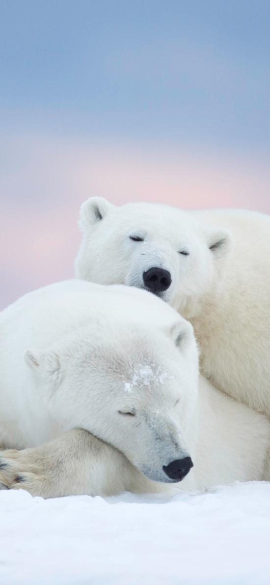 北极熊 白色 雪地