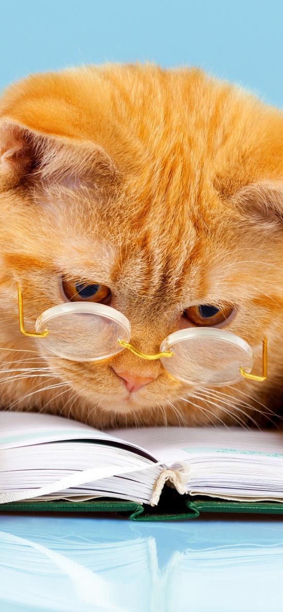 猫咪 阅读 书本 眼镜 喵星人 宠物