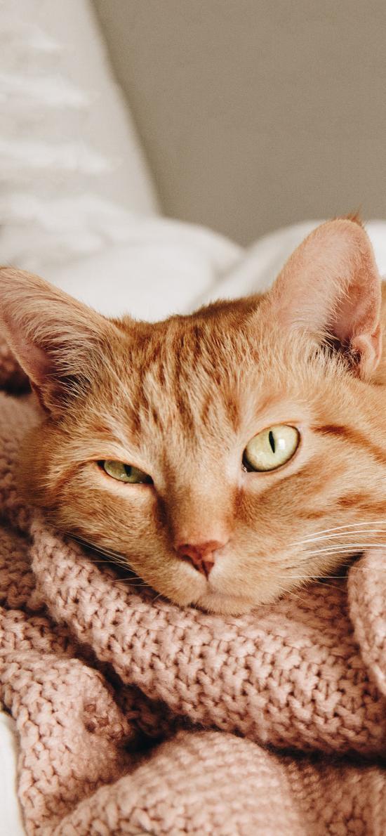 毛毯 喵星人 橘猫 猫咪