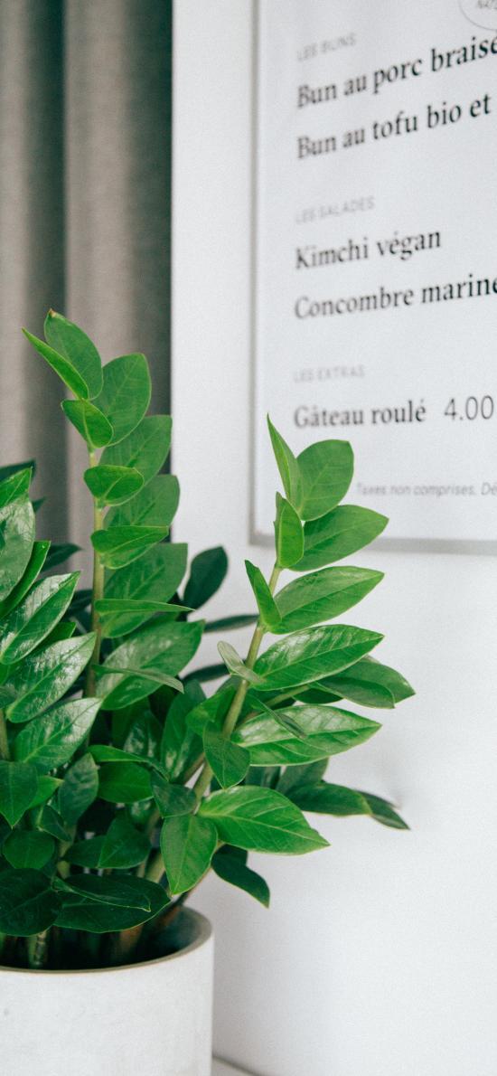 绿植 观赏性 盆栽 绿叶