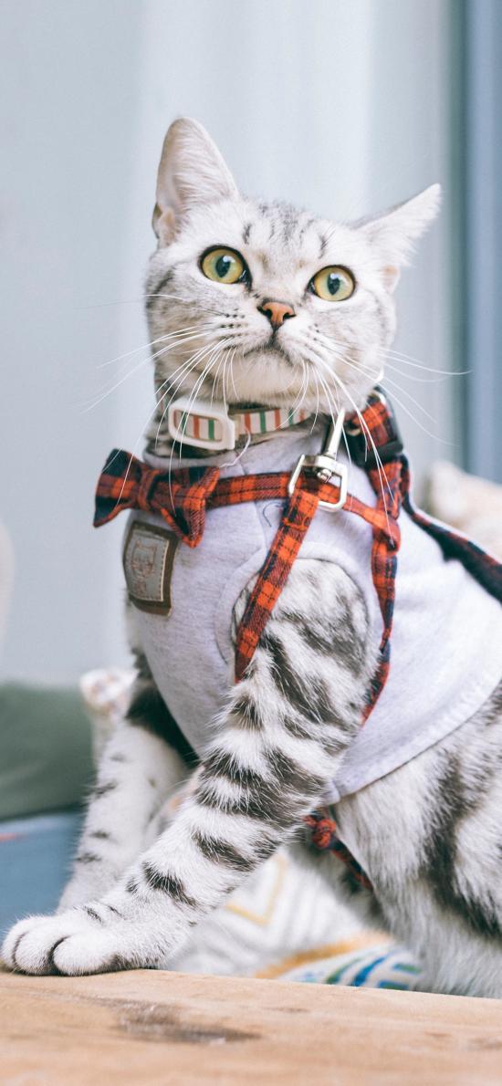 毛默 宠物 绳索 溜猫