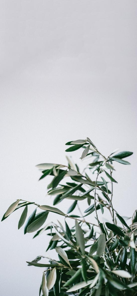 树木 枝叶 绿叶 绿化