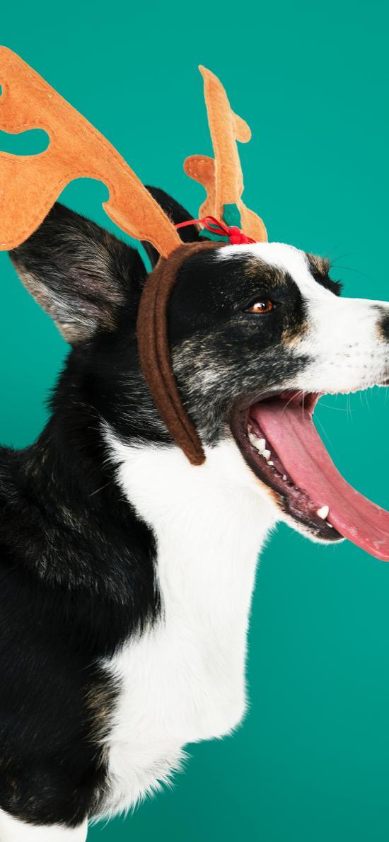 狗 鹿角 圣诞 吐舌