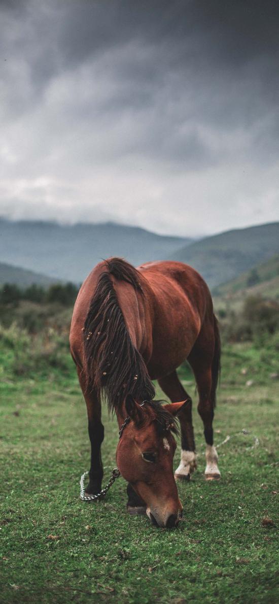 郊外 草地 棕马 食草