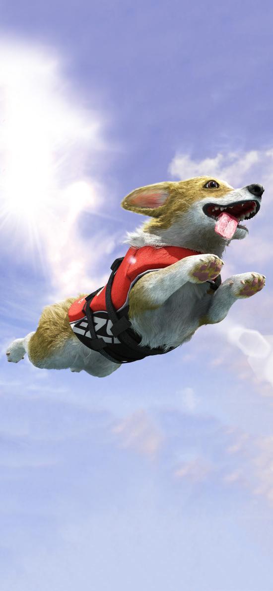 柯基犬 插画 手绘 艺术