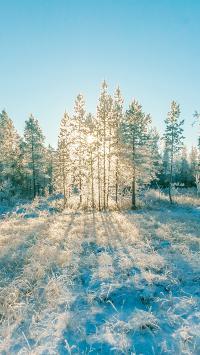 雪地 冬季 寒冷 阳光 树木