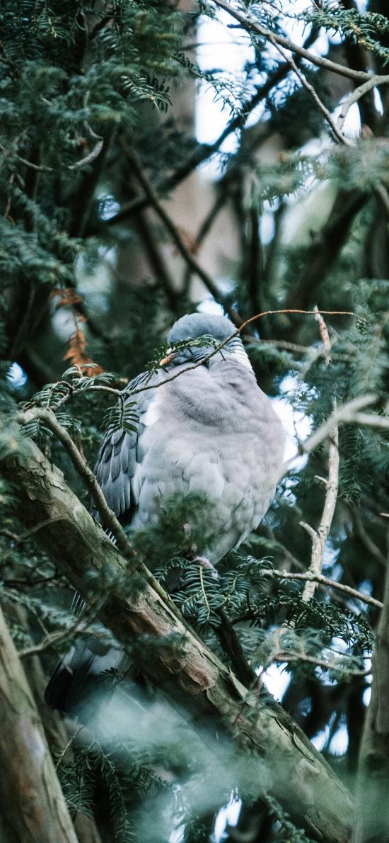 鸟类 树枝 羽毛 站立