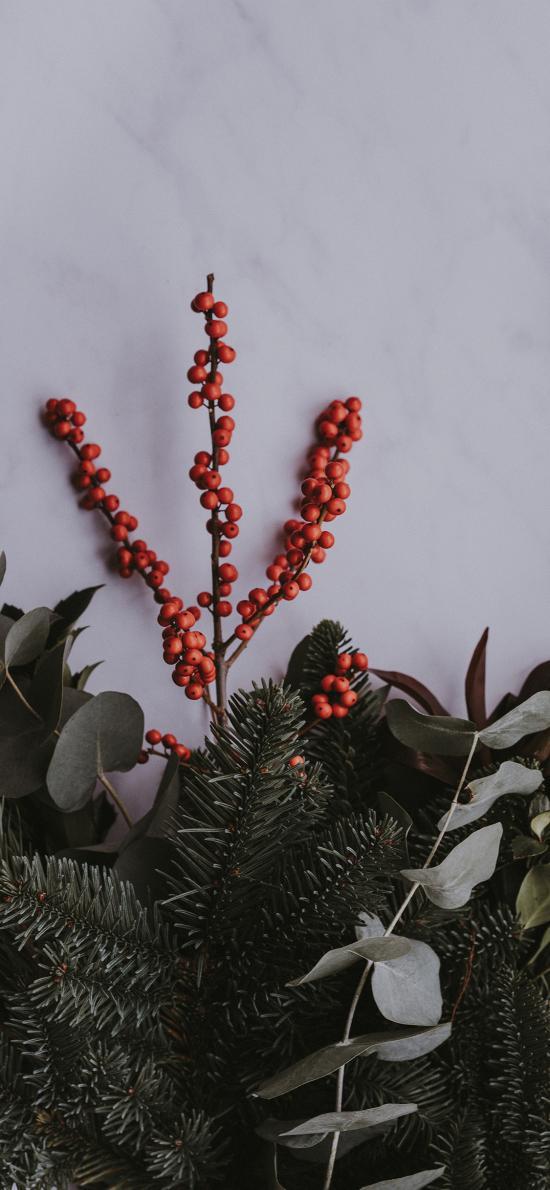 浆果 尤加利叶 针叶 松枝