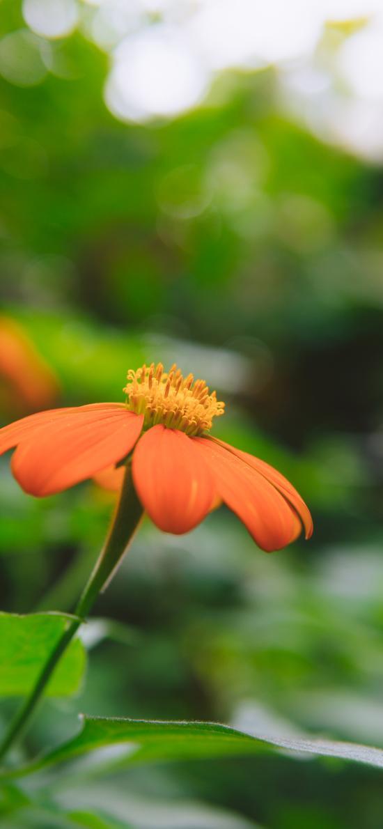 花朵 鲜花 盛开 花蕊