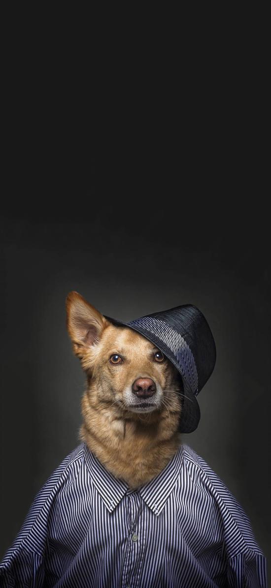 宠物狗 写真 服装 帽子