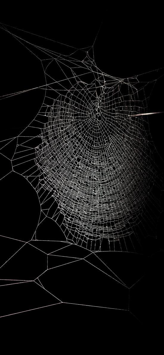 黑色 蜘蛛网 结构 编织
