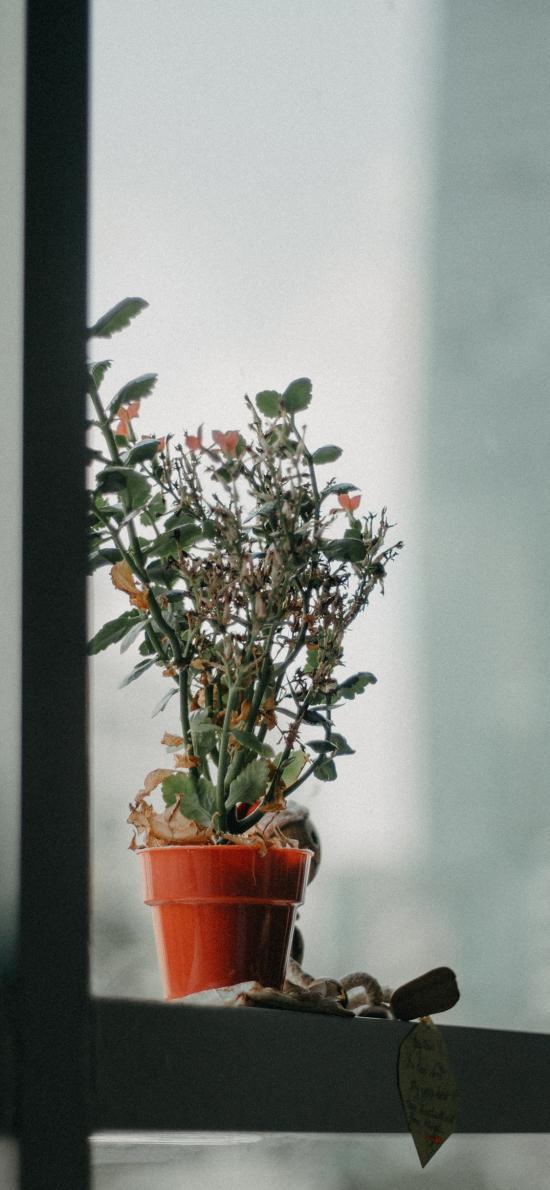 窗台 盆栽 观赏 绿化