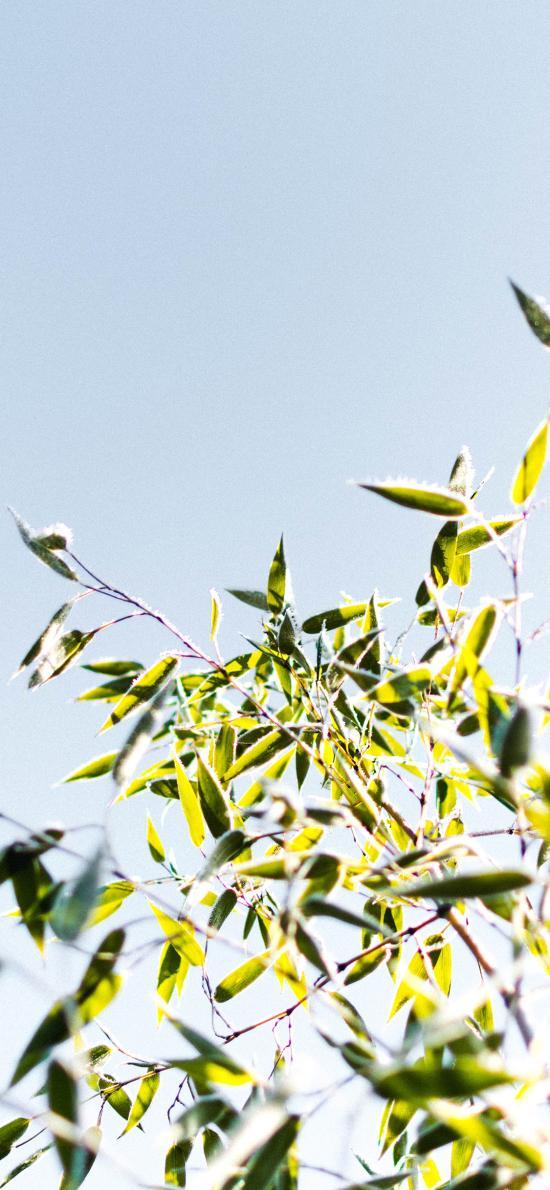 绿植 枝叶 阳光 清新