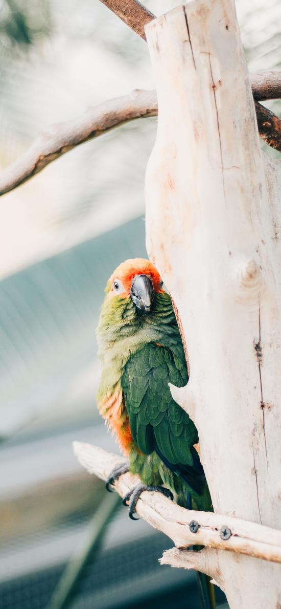 鹦鹉 树干 羽毛鲜艳