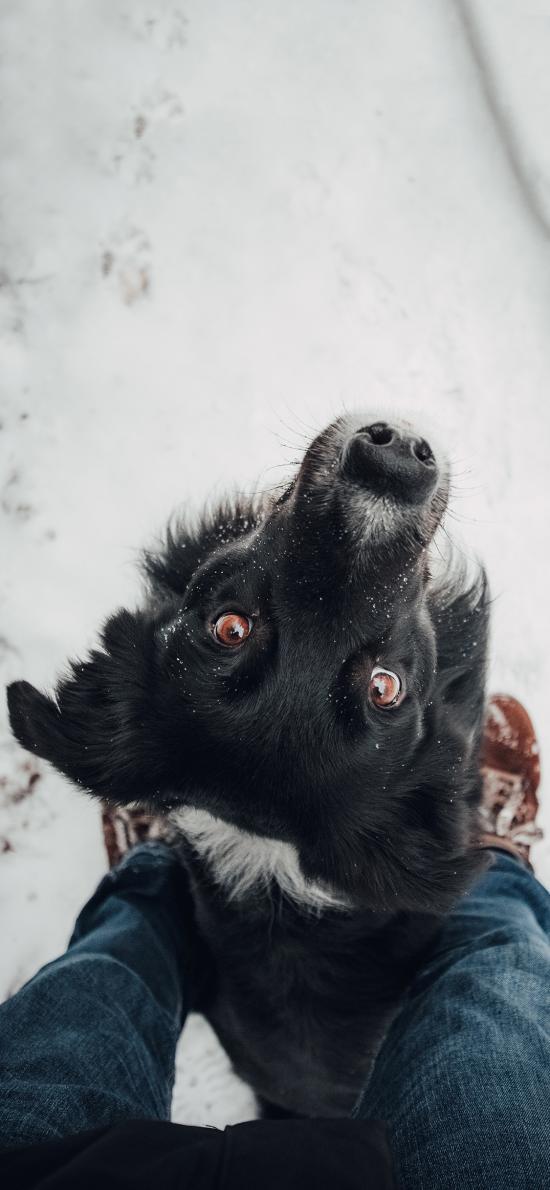 雪地 宠物狗 汪星人 忠诚