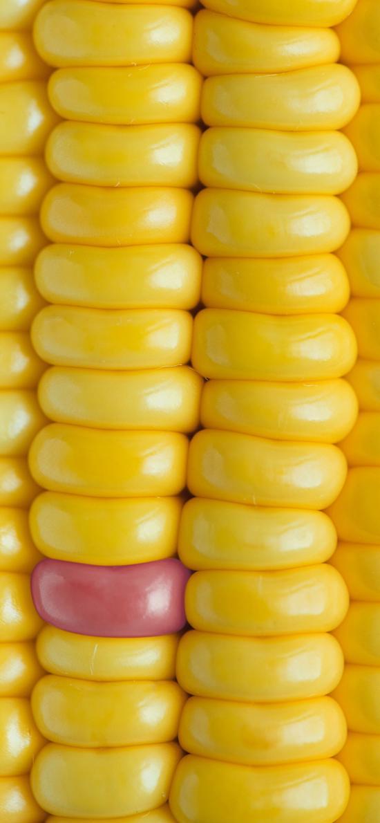 玉米 粮食 颗粒 黄色