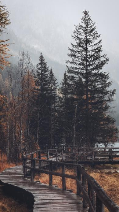 郊外 自然 美景 树木 雾气