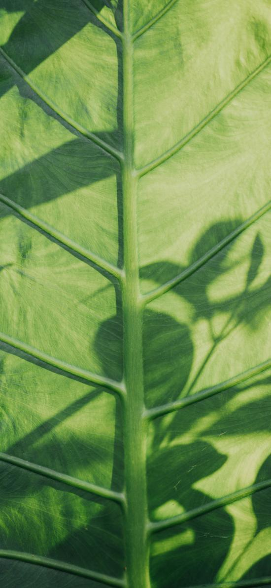 树叶 绿叶 纹理 投影
