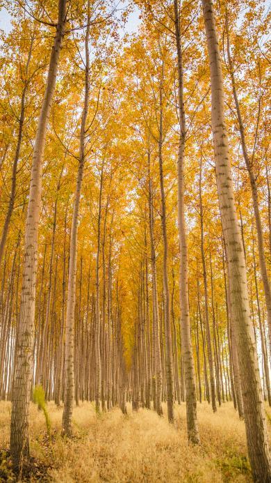 树林 秋季 种植 落叶