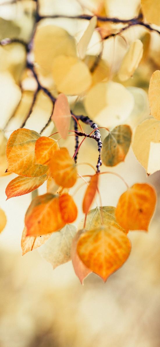 树木 枝叶 枯黄 秋季