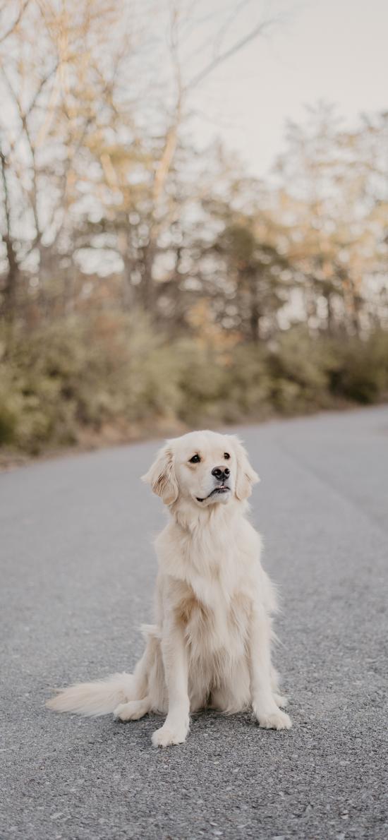 狗 宠物 道路 户外 宠物