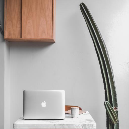笔记本电脑 苹果 Mac 仙人掌