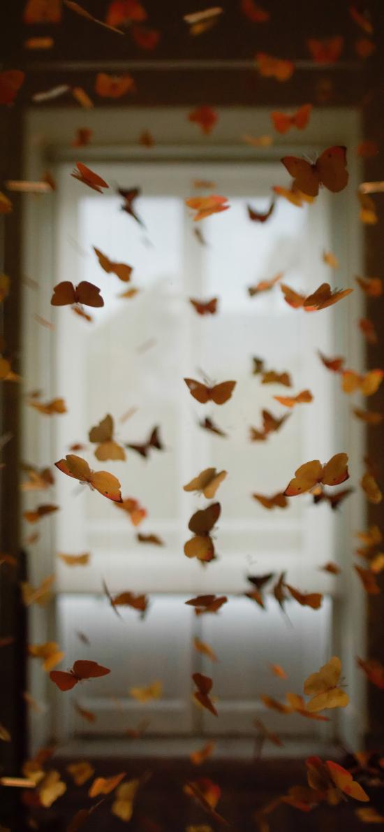 昆虫 蝴蝶 黄色 密集